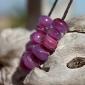 bougainvillea seeds