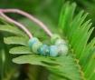 Wild Fern Seeds